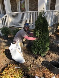 landscaper planting tree
